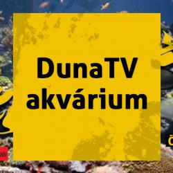 0306-dunatv-akv