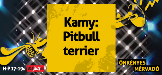 Kamy – Pitbull terrier